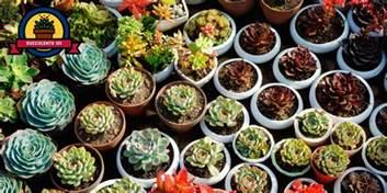 25 succulent plant types different kinds of succulents list