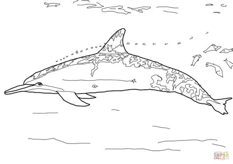 coloring page of bottlenose dolphin spinner dolphin coloring page free printable coloring pages