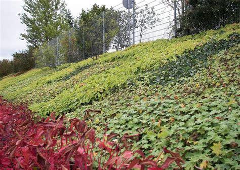 hanggestaltung pflegeleicht geranium bodendecker bodenbdecker zur hangbepflanzung