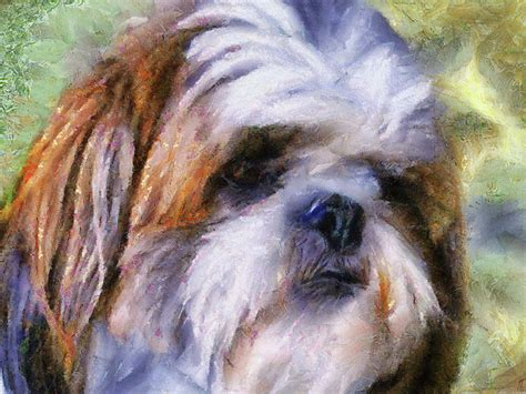 shih tzu painting shih tzu portrait painting by jai johnson