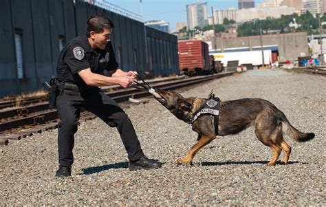 seattle animal shelter dogs seattle animal shelter foundation to honor retiring k9 ziva at annual
