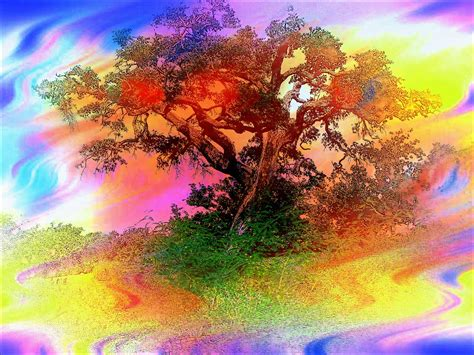 colorful tree what is my path finding the secret to your path