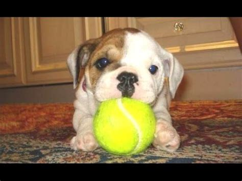 7 way puppy puppy are the best way to cure monday blues rewind 100 7