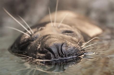 what age is a a senior age is quot just a number quot for shelby the senior harbor seal