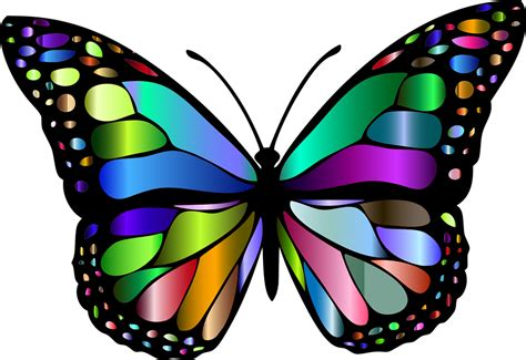 clipart farfalla hd butterfly clip arts images black and white outline