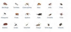house pest pest control