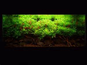 aquascaping world competition gallery mekong by