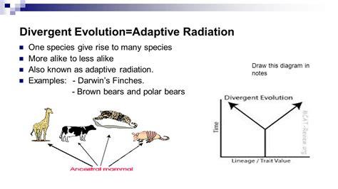 adaptive radiation diagram unit 10 history of biological diver pap evolution darwin