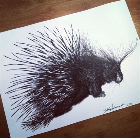 porcupine tattoo 17 best images about drawing pen and ink on