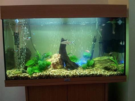120 liter aquarium 4107 juwel 120 community fish tank tropical fish site