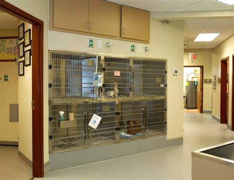 Vet Office by 17 Best Images About Veterinary On Reception