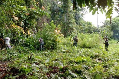 Satuan Pembersihan Lahan Babinsa Yapen Timur Bantu Masyarakat Pembersihan Lahan Tanam
