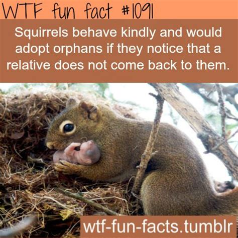source click here squirrels facts the kindness of