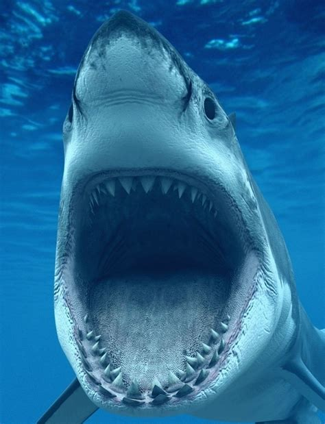 what is the largest great white shark ever recorded primer largest great white shark ever filmed stars in new video