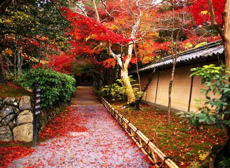 in japanese 2015 japan in autumn colours journey to the east