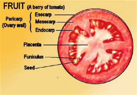 bio placenta adalah bio ahmad struktur tumbuhan