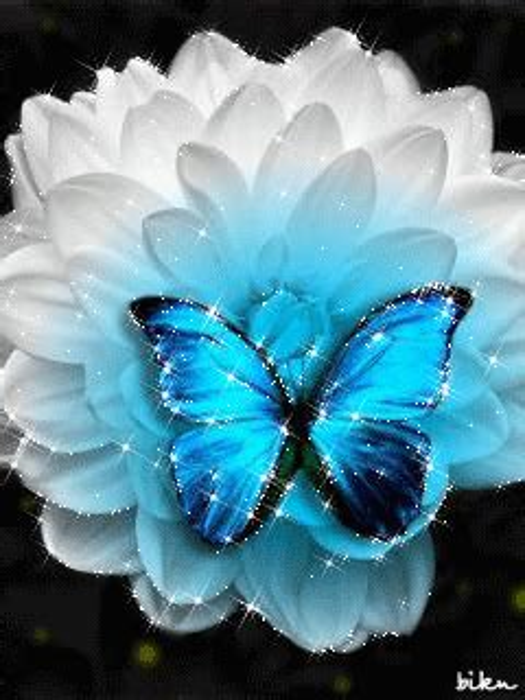 imagenes mariposas turquesas gifs de animales mariposas con movimiento