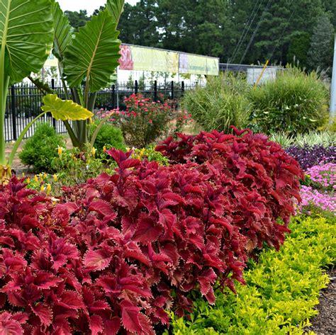 summer gardening late summer garden tips gardening tips flower wiki