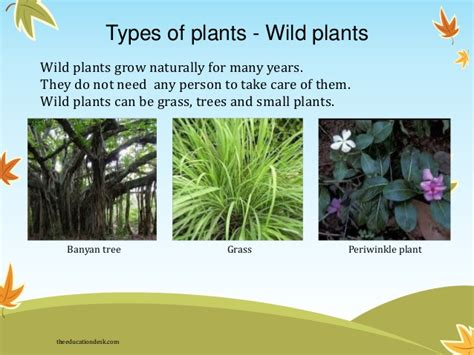 how many types of plants are there in the world know