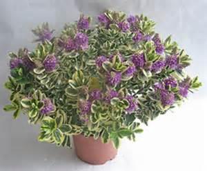 fleurs v 233 ronique panach 233 e