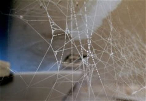 web pattern black widow okc pest control helps you identify black widow webs the