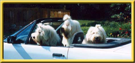 rhoad  english sheepdogs