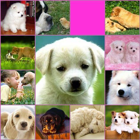 imagenes tiernas de perritos los perritos im 193 genes de perritos tiernos
