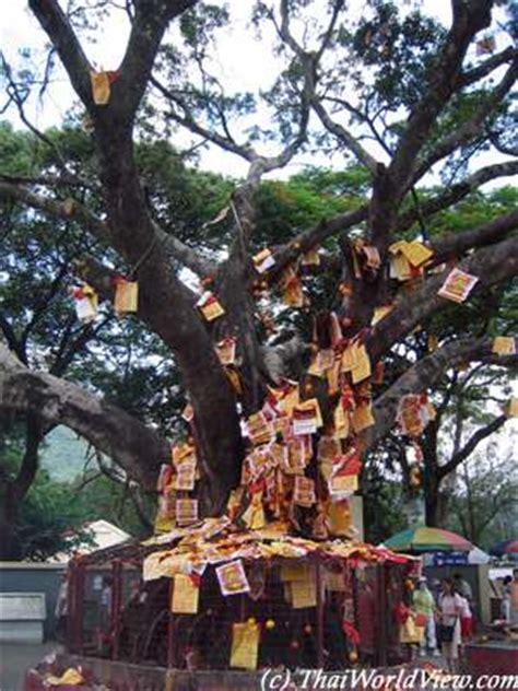 lam tsuen wishing tree new year travel in new territories gt lam tsuen page 1 3