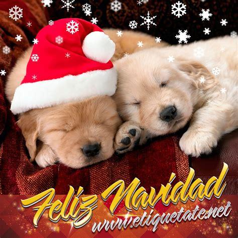 imagenes feliz navidad con perros frases e im 225 genes navide 241 as de cachorritos para compartir