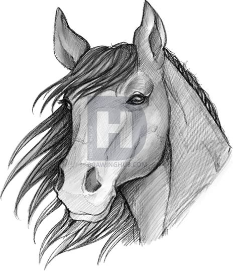 How To Sketch A Horse Step By Step Drawing Guide By Darkonator Drawinghub Free Drawing Pictures