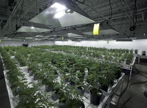 Garden Of Dispensary Everything You Need To About N J S Marijuana