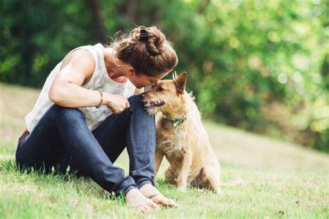 alimentazione casalinga per cani alimentazione casalinga per cani con insufficienza renale