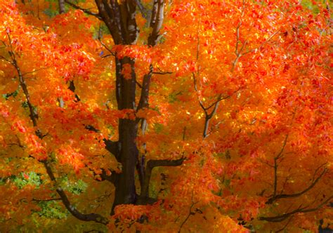fall foliage colors wind current