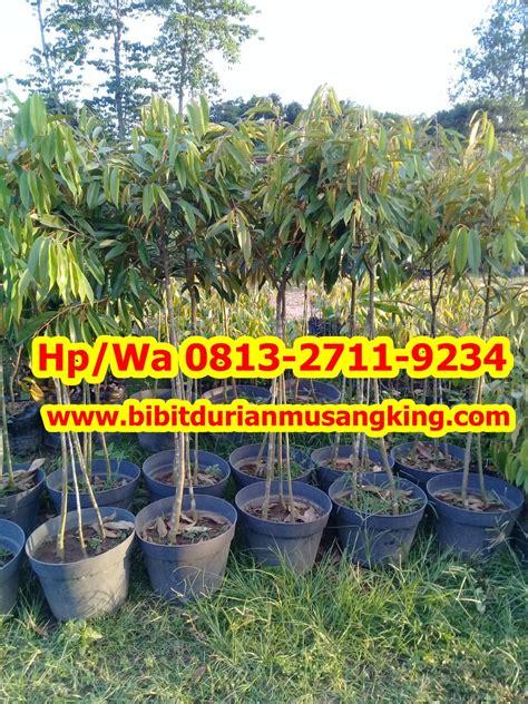 Harga Bibit Durian Bawor Terbaru bibit durian bawor archives penjual bibit durian beli