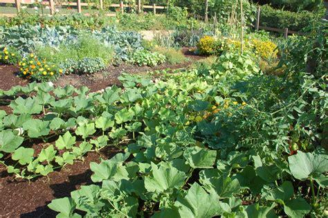 gardening backyard texas vegetable garden garden idea texas vegetable