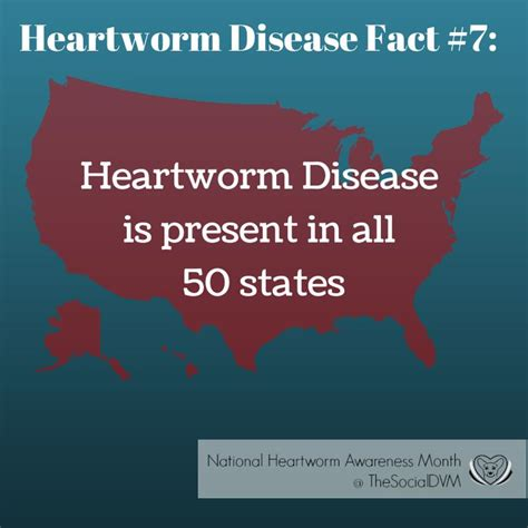 heartworm medication heartworm disease fact 7 april heartworm awareness month