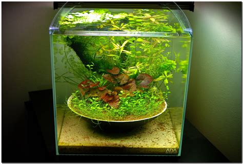 Small Tank Aquascaping by Post Your Favorite Aquascapes Inspirations And