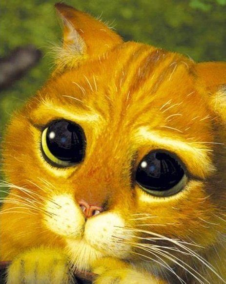 los gatos m 225 s famosos de los gatos famosos mundogatos com