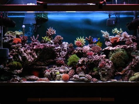 marine tank aquascaping 181 best images about fish tank on pinterest saltwater