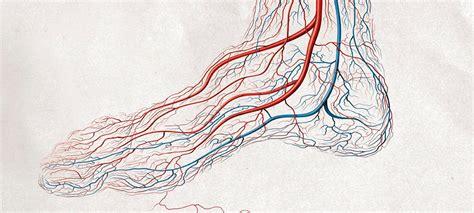 imagenes reales de venas cortadas por qu 233 las venas se ven azules si la sangre es roja lv