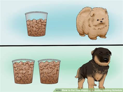 how to put weight on a puppy how to put your puppy on a healthy feeding schedule 11 steps