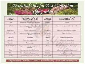 Essential Oils For Garden Pest Control - essential oils for garden pest control gardening pinterest