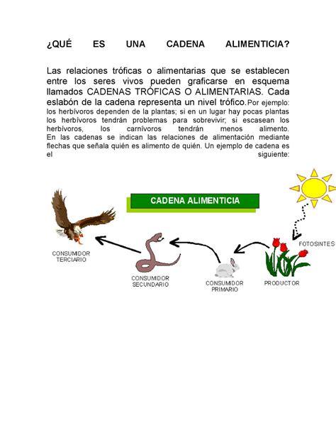 cadena trofica acuatica wikipedia calam 233 o qu 233 es una cadena alimenticia