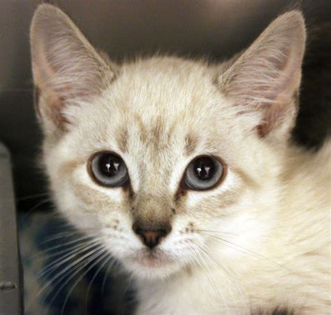 adoption utah fall in at ivins animal shelter event adoption fees waived or reduced