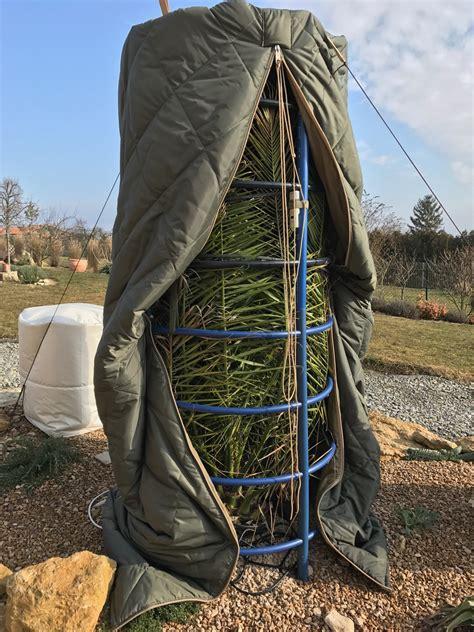winterschutz palmen winterschutz einer canariensis