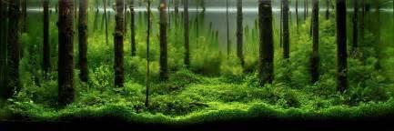 The Best Aquascape by An Intermediate Guide To Aquascaping Aquaec Tropical Fish