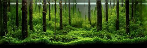 The Best Aquascape by An Intermediate Guide To Aquascaping Aquaec Tropical Fish