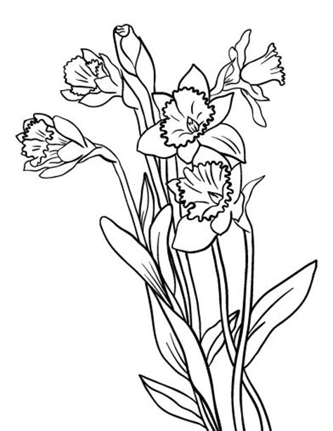 coloring pages daffodil flowers printable daffodil coloring page free pdf download at