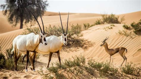 4 the of go l d dubai desert conservation reserve dubai tickets