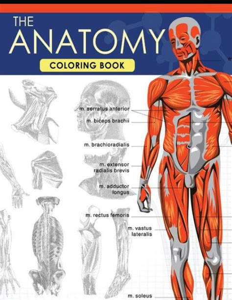 The Anatomy Coloring Book A Complete Study Guide 9th